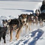 Running With The Dog Sledding Pack