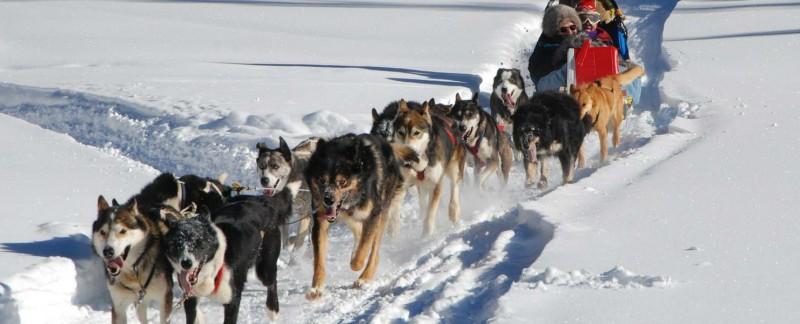 Enjoy Dog Sledding in Whistler