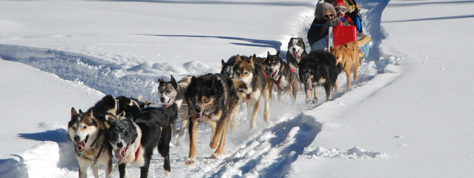 Enjoy Dog Sledding in Whistler