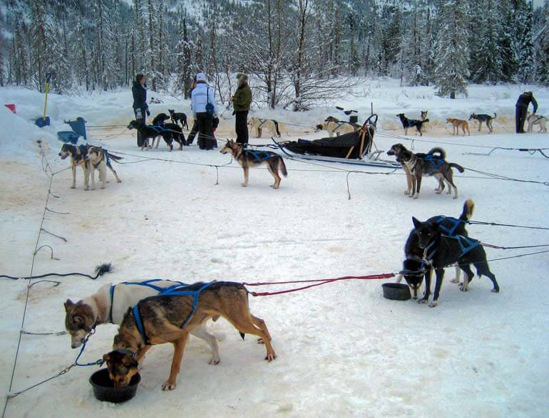 Preparing for Dog Sledding