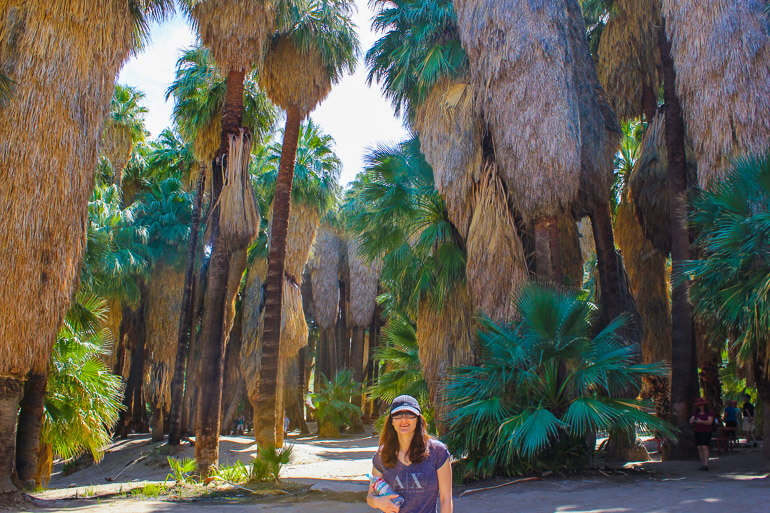 Base of a Palm Oasis
