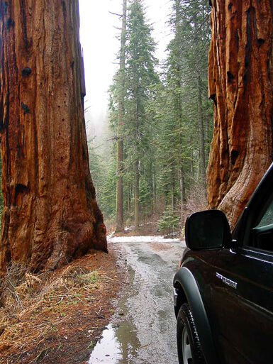 Driving into Sequoia National Park